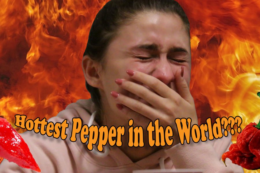 Hottest Pepper in the World?