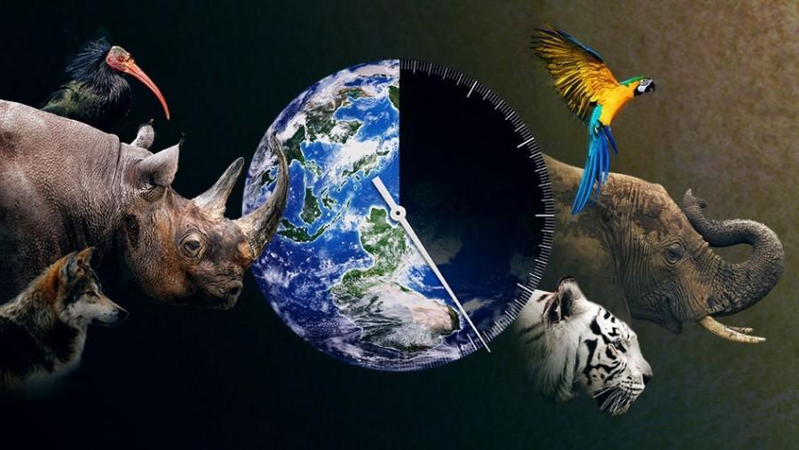 u201cracing extinction u201d  u2013 granite high world