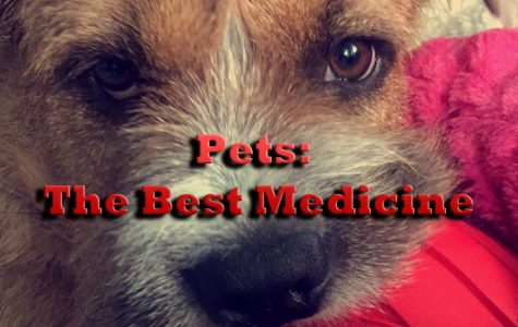 Pets: The Best Medicine