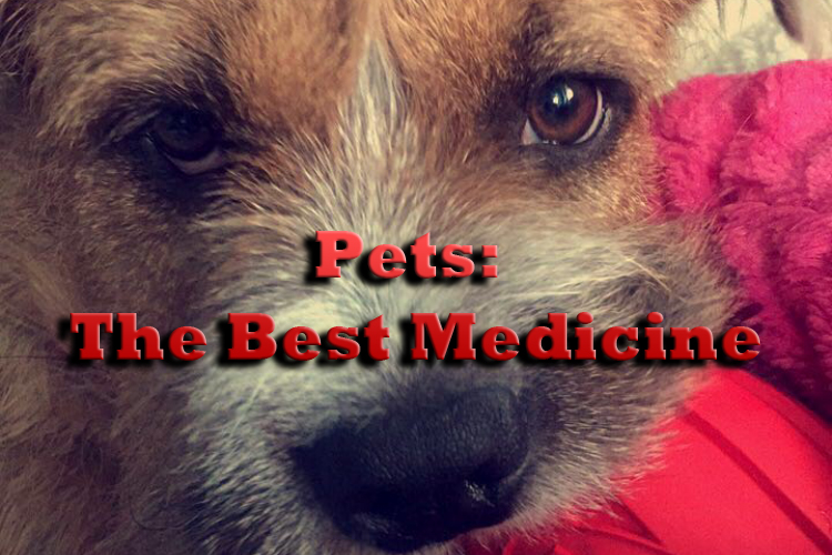Pets%3A+The+Best+Medicine